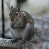 Squirrel 3-1-09