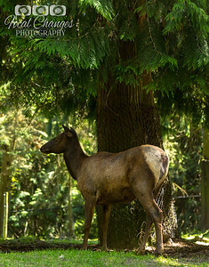 2013_07_27_WoodlandParkZoo-4738