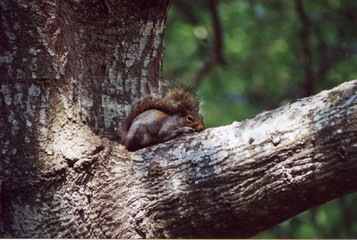 """I found this guy taking a much-needed snooze on a lazy summer day at the Autrey Mill Nature Preserve.  """"Much-needed"""" because he had worn himself out trying to get to the seed in my birdfeeders!"""