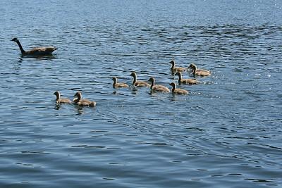 On Hayden Lake.