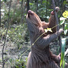 Sloth making his get-away