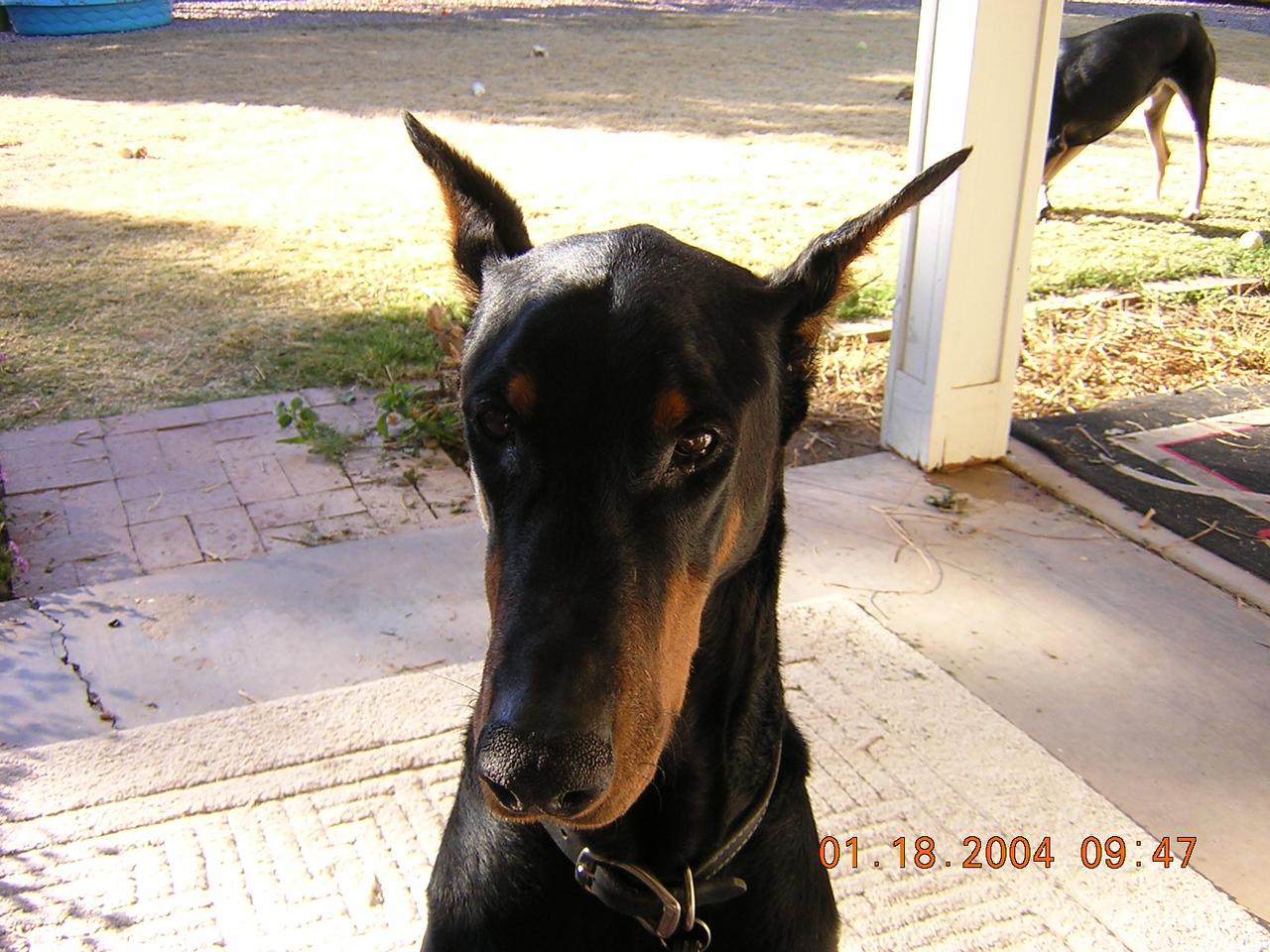 Luger. The best dog ever! Boy, I miss him!