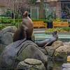 Regal Sea Lions