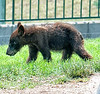 Bear cub; best viewed in the largest size