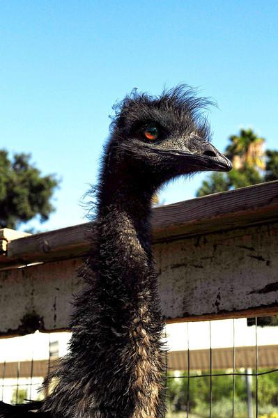 Emu Power