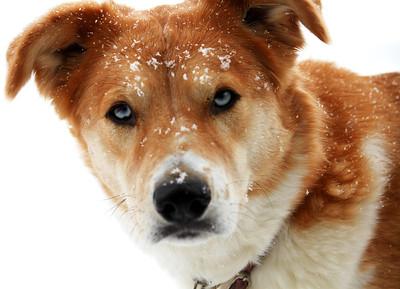 Anja's Snow Day