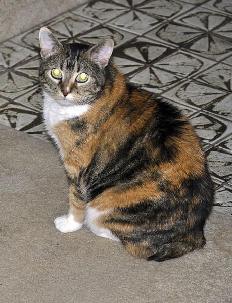Beware the devel cat!