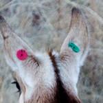 Antelope and elk Oct 31