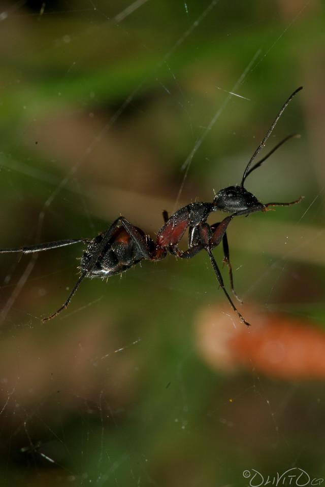 Ants-17