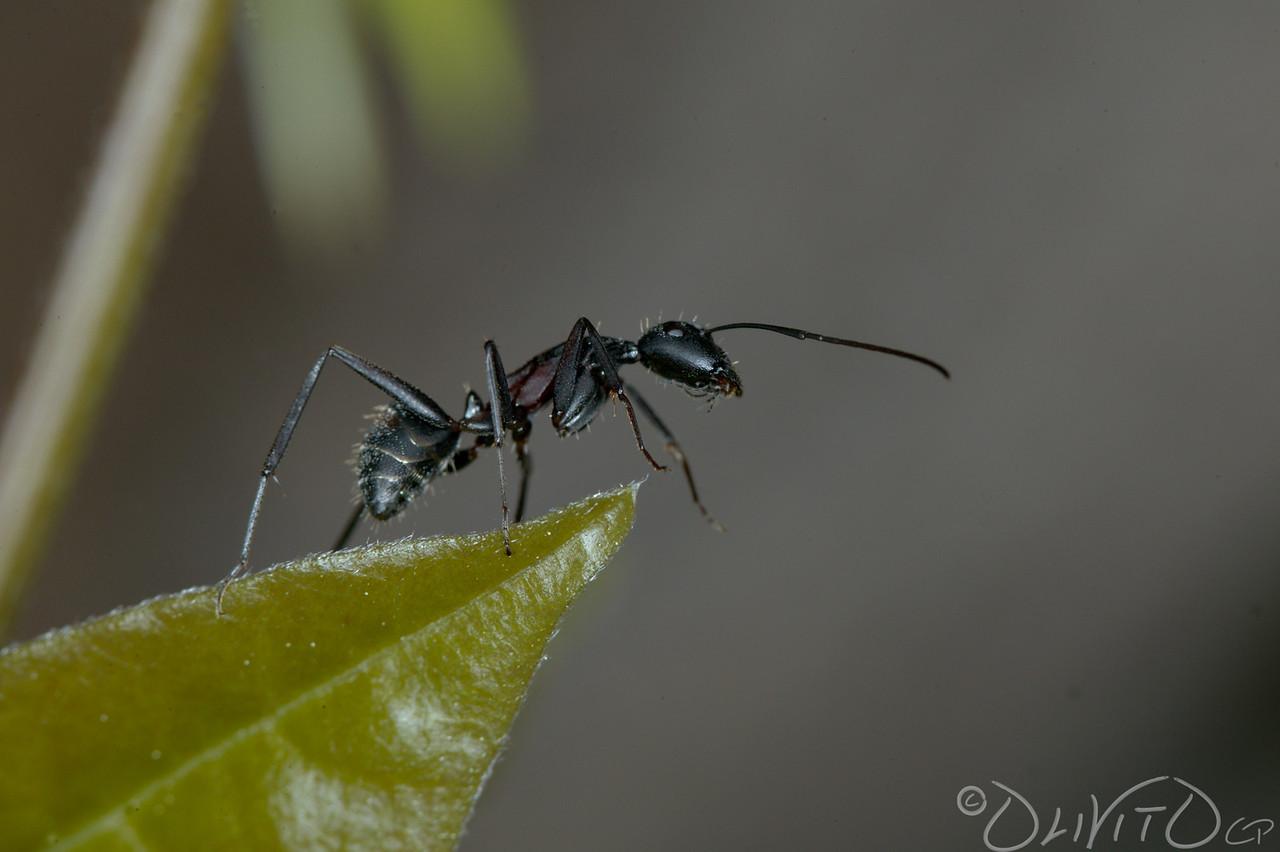 Ants-33