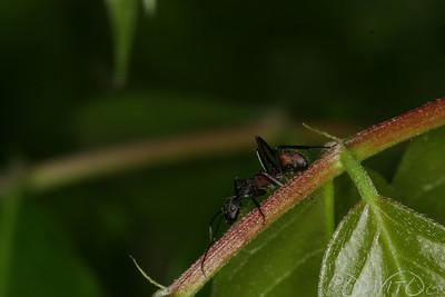 Ants-19