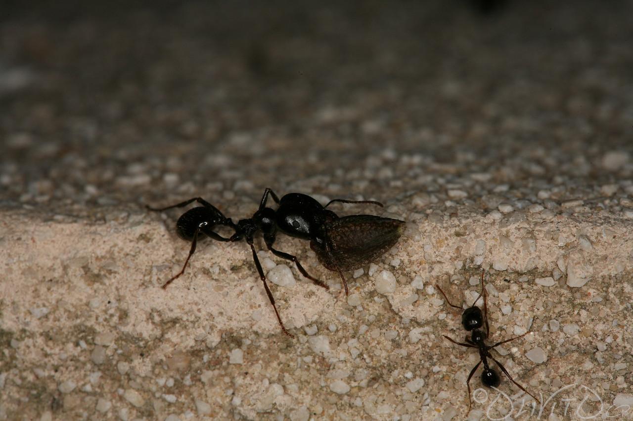 Ants-41
