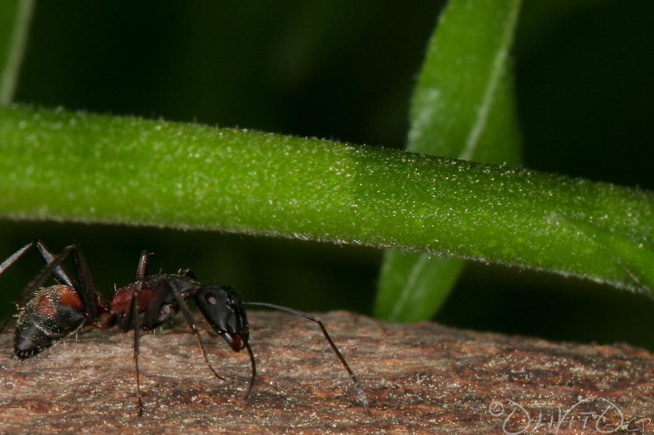 Ants-46