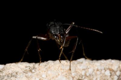 Ants-7