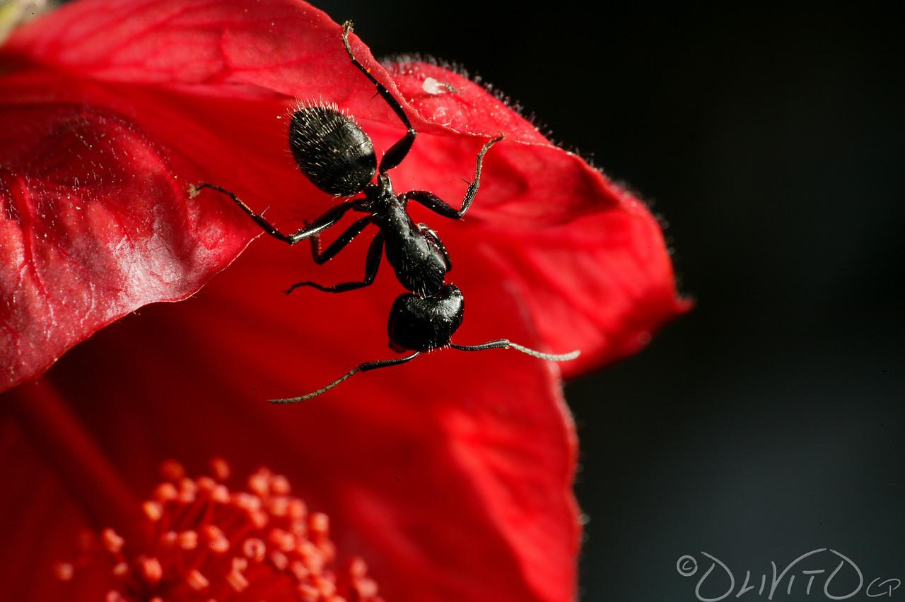 Ants-24