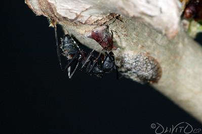 Ants-27