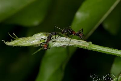Ants-6