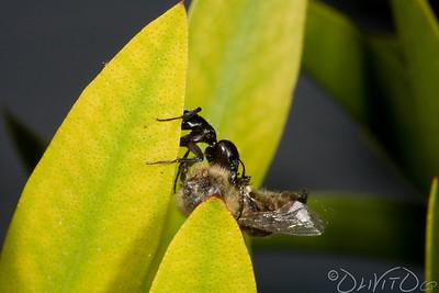 Ants-9