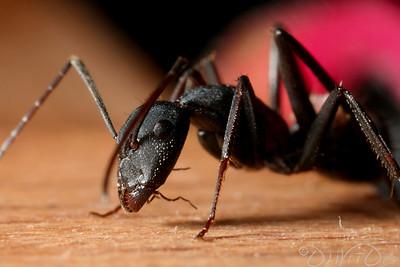 Ants-15