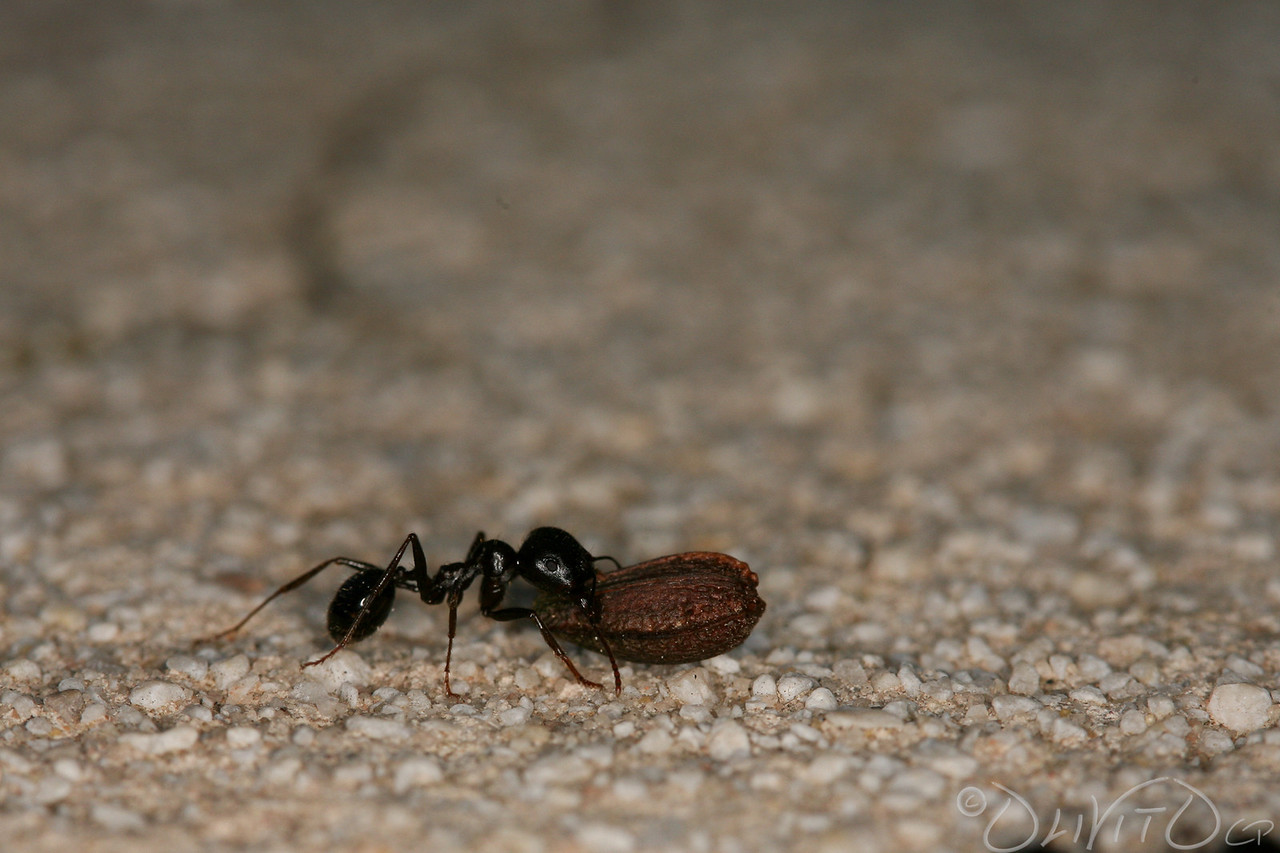 Ants-40