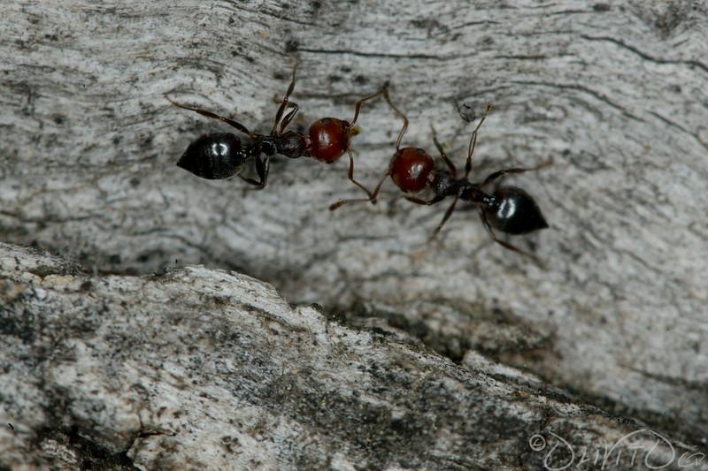 Ants-36