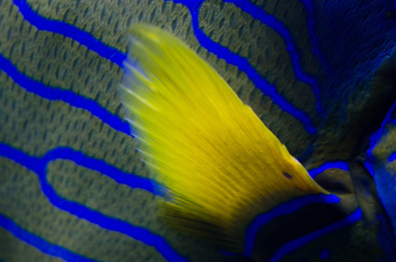 The bright yellow fin of the fish that's also in the preceding photograph.