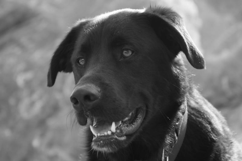 A happy dog