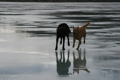 Apollo and Maggie on a frozen Mendenhall Lake