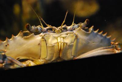 Aquarium-August-2011