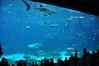 AtlantaOct2009_0280