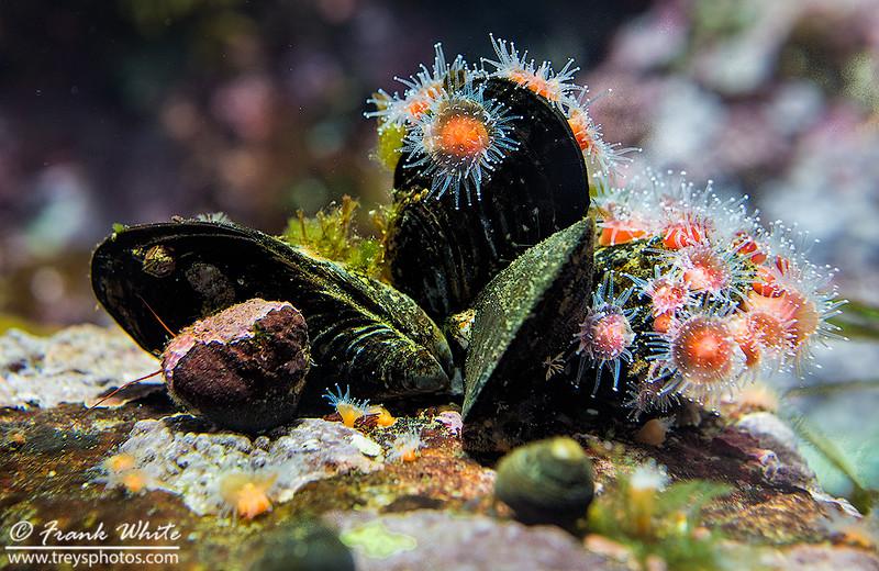 Sea anemonea #5