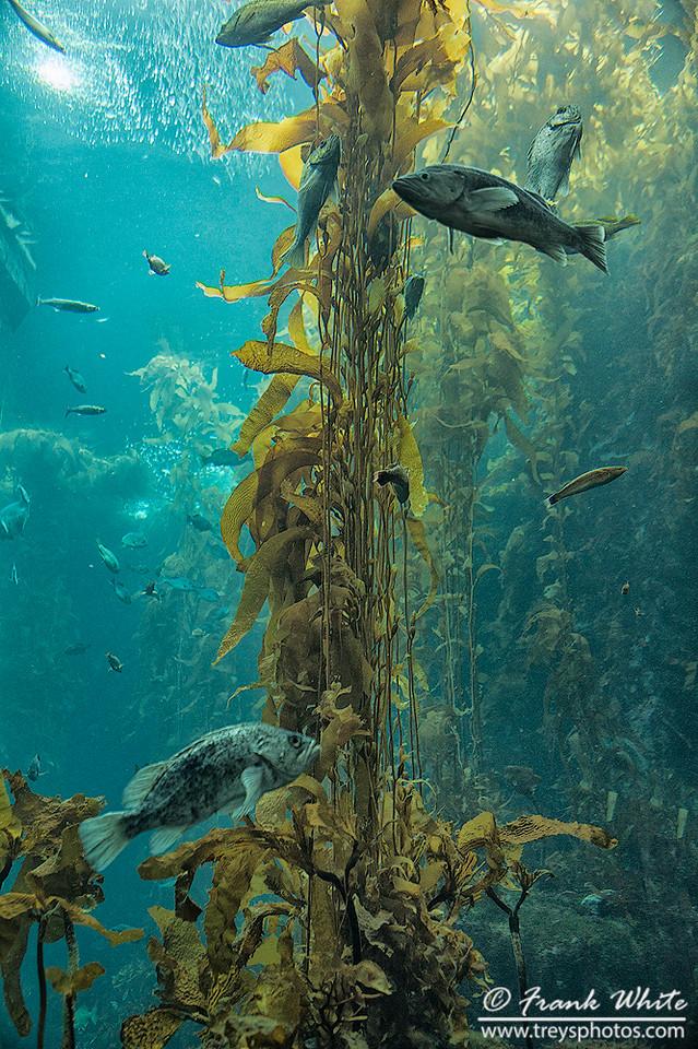Kelp forrest