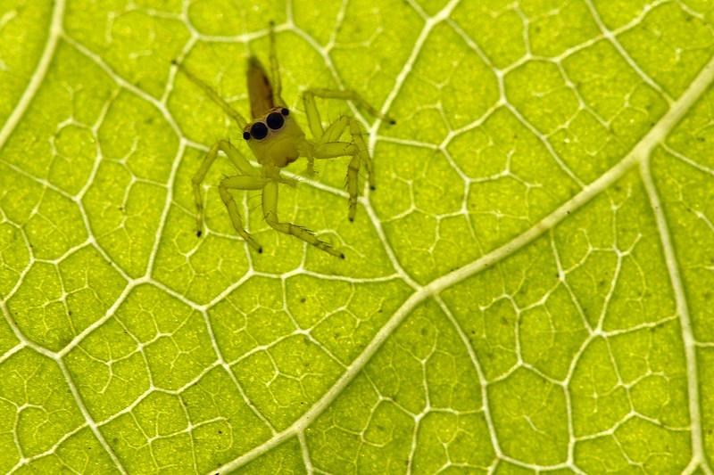 Jumper and a leaf