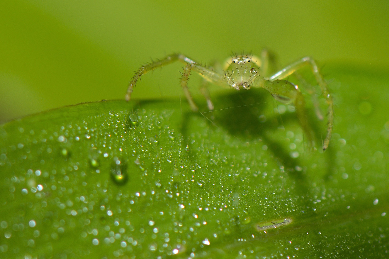 A tiny little Crab Spider