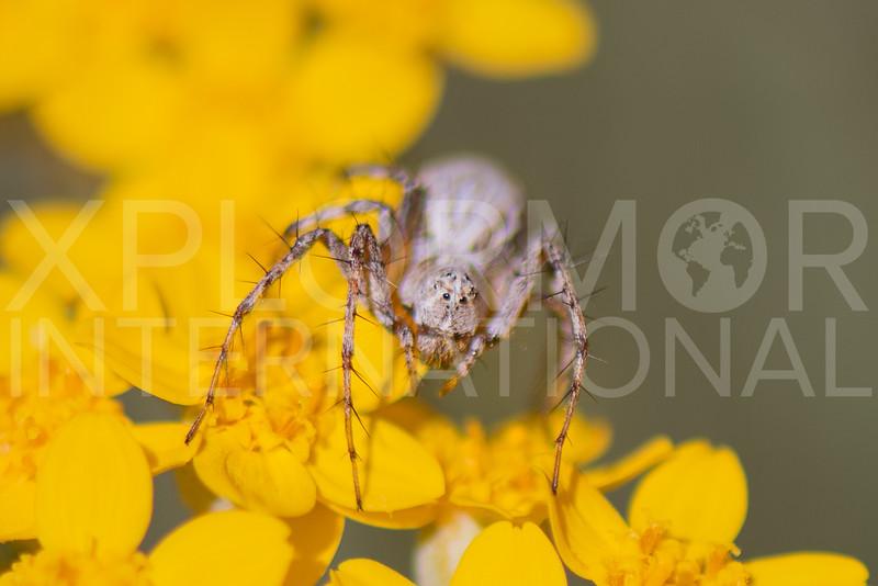 Spider - Need ID