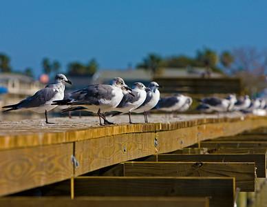 birds-pier_8020