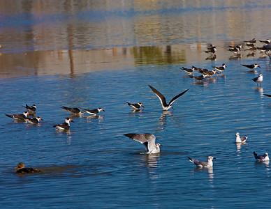 shore-birds_8015