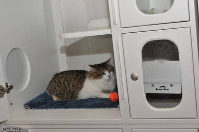 Archimedes 11-25-2011