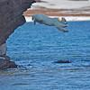 Flying polar  bear cub