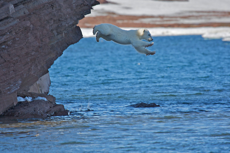 Flying polar  bear cub