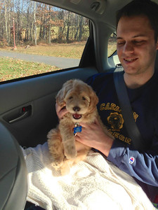 Taking Ari home - he is a great car passenger!  I love this dog already!