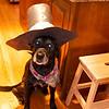 Arizona on Thanksgiving 2011