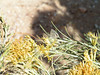 Reakirt's Blue, San Pedro Riparian Area, AZ nov 25, 20 (1)