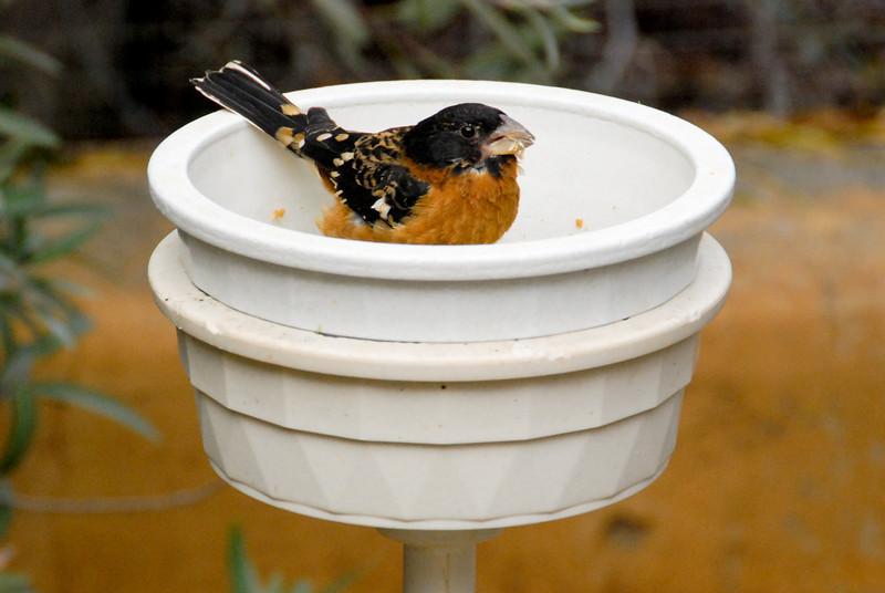 bird eating breakfast