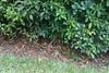 The armadillos eventually got shy.