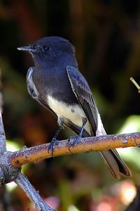 _DSC0782-Bird