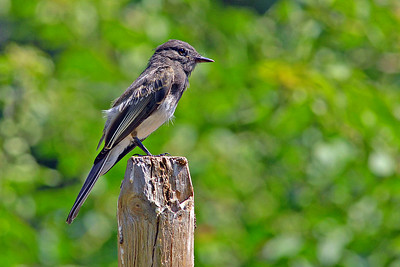 _DSC4474-Bird-4x6