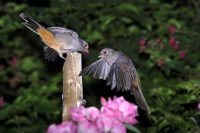 _DSC4636-Bird Flyby-4x6