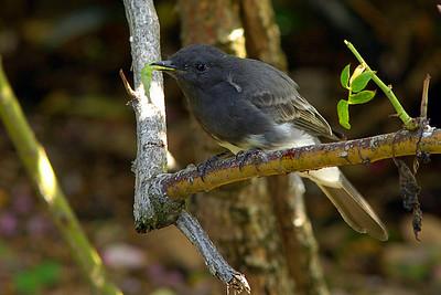 _DSC4487-Bird-Worm-4x6
