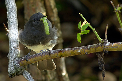 _DSC4486-Bird-Worm-4x6